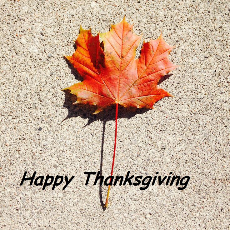 Happy Thanksgiving from MIlot Law Tax Lawyers in Toronto #Thanksgiving #TaxLawyer #MilotLaw