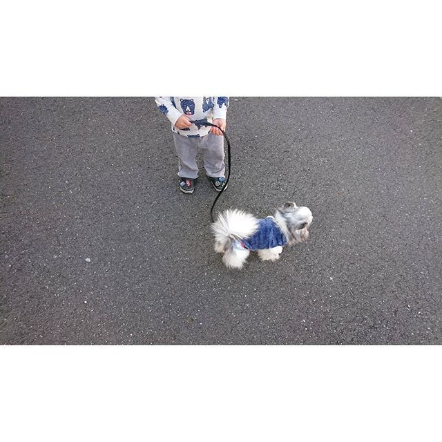 . . . 今朝の年子👧👦見送り後のお散歩🐕 . . 最近ケージから出さないと朝と夜はずっと吠えてる😂 から何だかんだで1日2回のお散歩🐕朝は家の周りだけだけど🤗 . 今日は待ちに待ったお出掛けなので準備します💓 . . #愛犬#チワワ#オス#老犬#犬のいる暮らし#犬のいる生活#お散歩#末っ子#次男#2歳#3児ママ#子育てママ#お出掛け#月1#withばぁば
