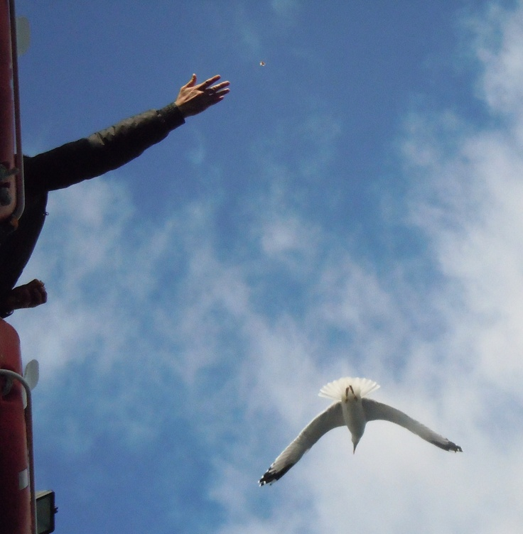 To liven up a boring ferry ride, people feed the seagulls on the trip.