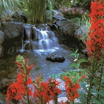 113 best images about japanese koi ponds on pinterest for Where to buy koi fish near me