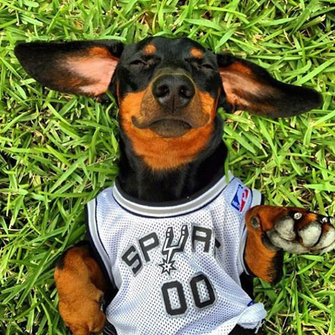 San Antonio Spurs — It's #NationalDogDay and we're over here like…. :...