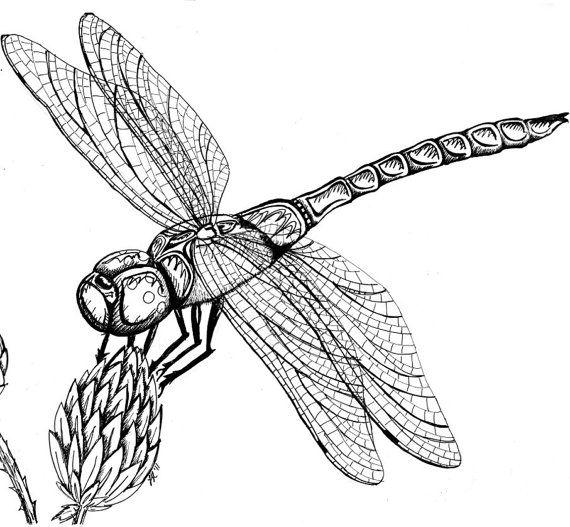 Dragonfly On Milkweed Original Pen Ink By Menacecreations