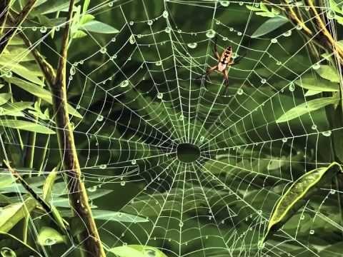 Kinderliedje met beeld: De spin wiedewin - YouTube