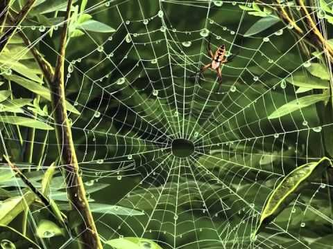 Kinderliedje met beeld: De spin wiedewin