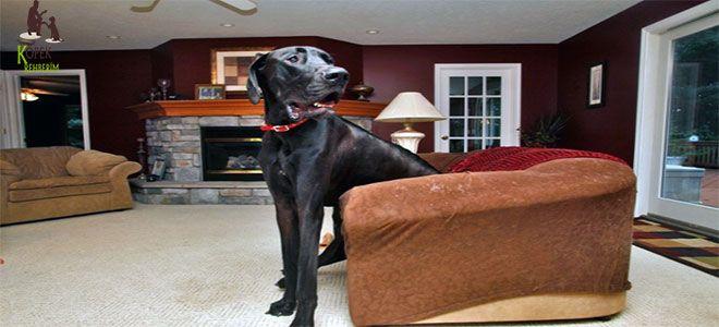Evde Köpek Eğitimi ve Kafes Kullanımı | Köpek Rehberim - Köpek Rehberiniz #köpek #evdeköpekeğitimi #köpekkafeseğitimi http://www.kopekrehberim.com/evde-kopek-egitimi-ve-kafes-kullanimi Evde Köpek Eğitimi ve Kafes Kullanımı