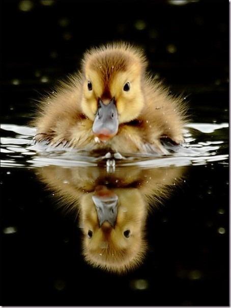 A True Reflection of Cute