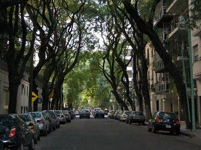 Beat the Heat: 5 Amazing Benefits of Urban Trees