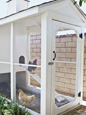Fresh Eggs, Screens Porches, Chicken Coops, Farms, Fancy Chicken Coop, Chicken Houses, Chicken Coupe, Screens Doors, Backyards