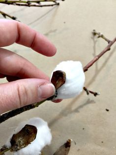 DIY Cotton Stems! Come see how easy it is to make some of your own! | Twelveonmain.com