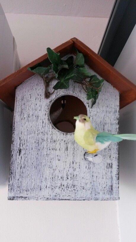 Kuş evim...