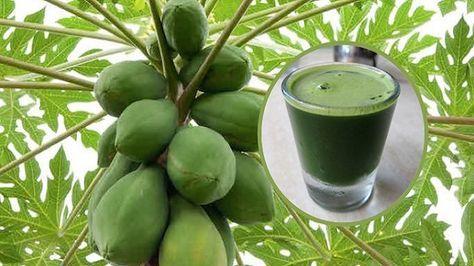 Las hojas de papaya se han utilizado en los últimos años en el tratamiento de numerosas enfermedades como el dengue, la malaria y la fiebre tifoidea. Anuncios  Estas hojas son muy útiles en el tratamiento del cáncer, ya que contienen fitonutrientes que son antioxidantes muy activos que pueden combatir los radicales libres de manera …