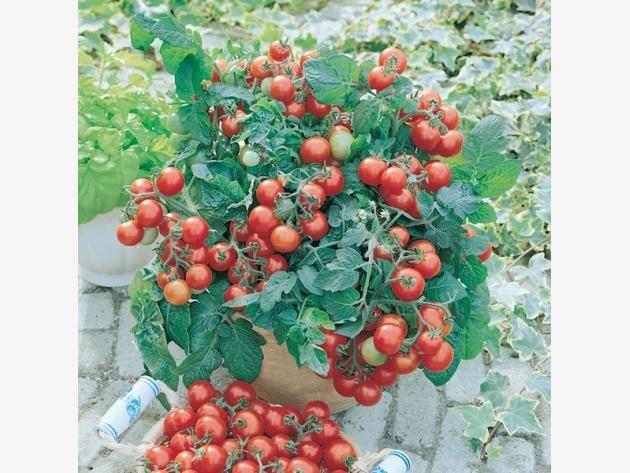 Die 25+ Besten Ideen Zu Balkon Pflanzen Auf Pinterest | Pflanzen ... Gartnern Auf Dem Balkon Frische Gestaltungsideen Fur Ihre Personliche Oase