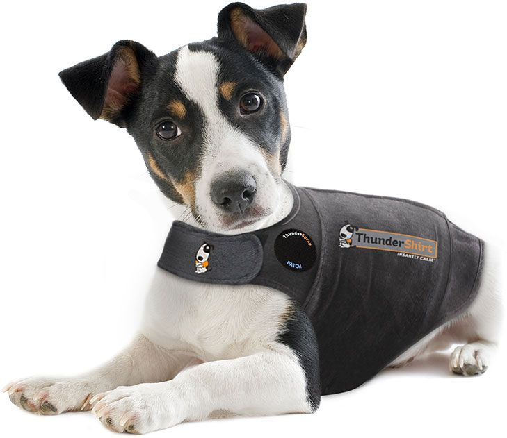 Thundershirt - Visit dvm360.com/FearFree to learn more about Fear-Free veterinary visits
