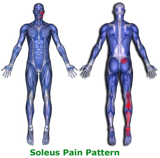 25 best Muscular Anatomy for Pilates images on Pinterest ... Soleus Muscle Pain Symptoms