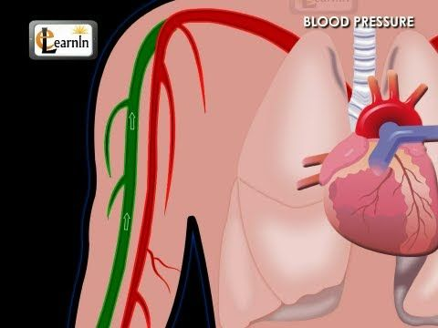 Understanding Blood Pressure | Human Anatomy and Physiology video 3D animation | elearnin