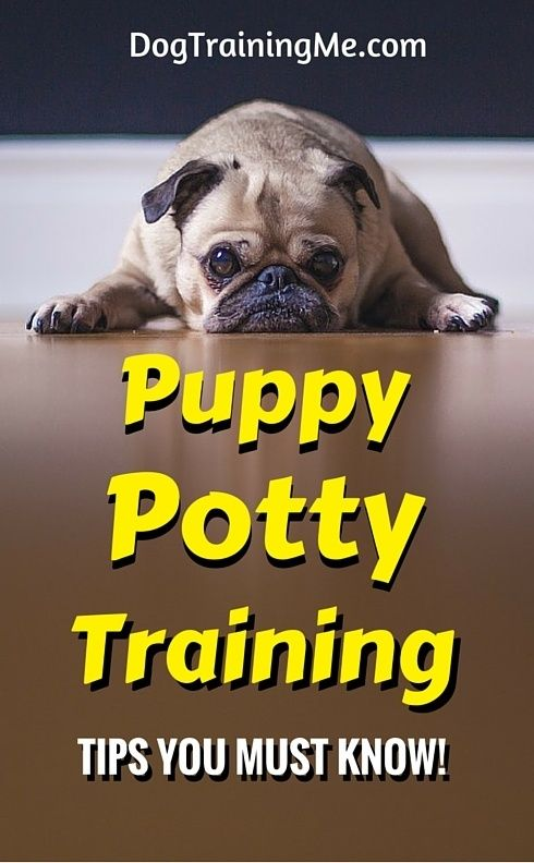 Puppy Potty Training Tips That Will End Your Frustration And Ruined  Carpets. One Crucial Change