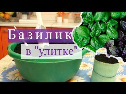 """Базилик в """"улитке"""". Быстро всходит, хорошо растет! (07.02.16г.) - YouTube"""