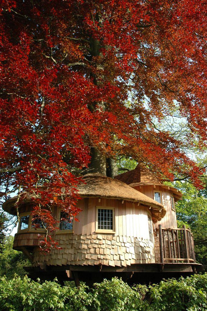 Little Acorn Tree House Flickr - Photo Sharing!