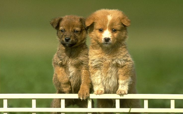 Puppies images Cute Puppies HD wallpaper and background photos ...