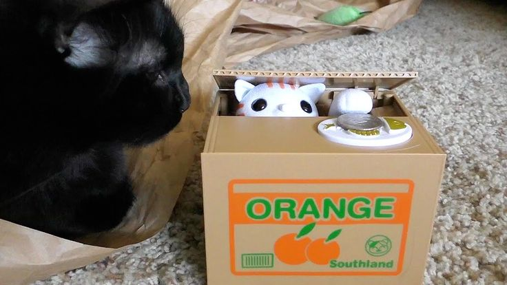 Cats Cole and Marmalade Become Confused by the Repetitive Motion of an Automatic Piggy Bank