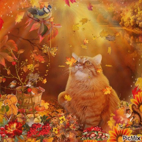 Image result for autumn cat gif