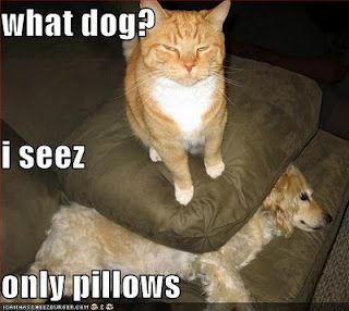 Funny Animal JOKES - Free Jokes Videos Pictures of Hilarious Animals and Pets: Funny Dog and Cat Pictures With Captions!