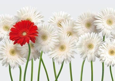 Mi piace pensare di appartenere ad uno stesso immenso universo, nel quale la nostra individualità non si perde anzi, viene esaltata da questa comunanza di cammino, da questa ricchezza di doni e diversità. Un fiore diverso dentro un giardino che più vario non si può.