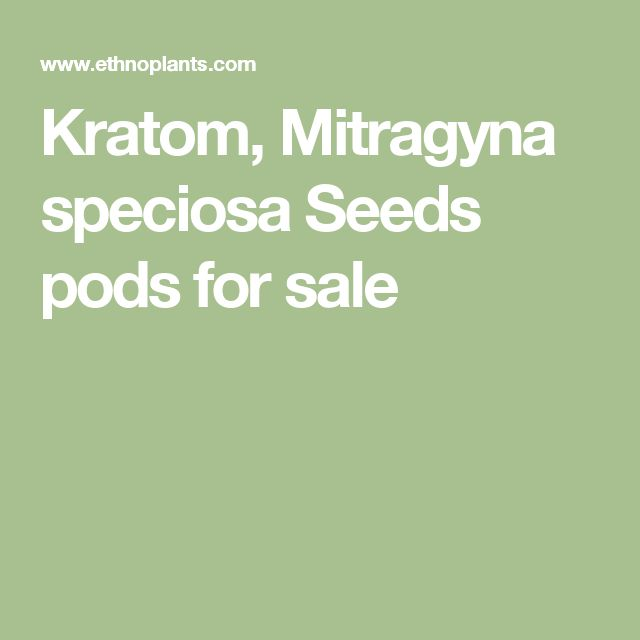 Kratom, Mitragyna speciosa Seeds pods for sale