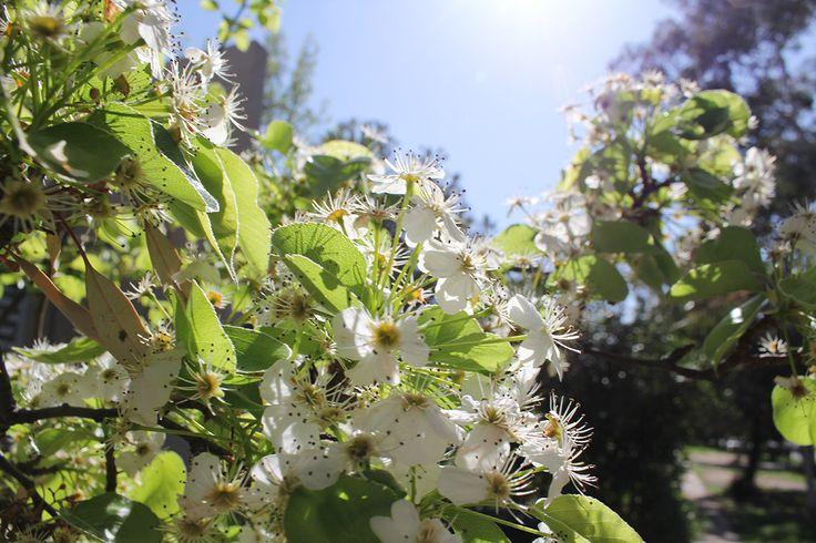 Canberra in spring