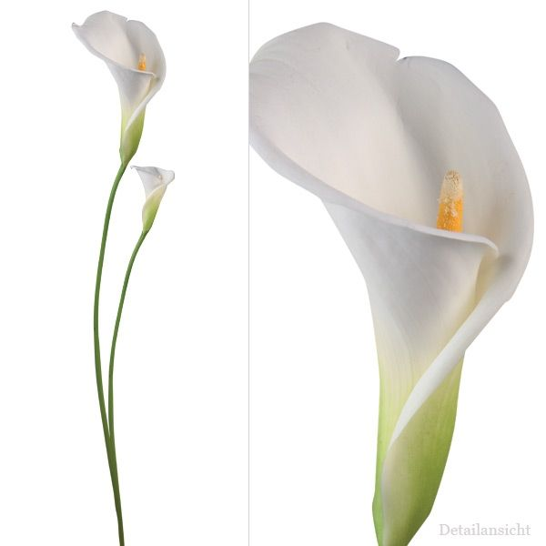 62 best calla lily tattoos images on pinterest. Black Bedroom Furniture Sets. Home Design Ideas
