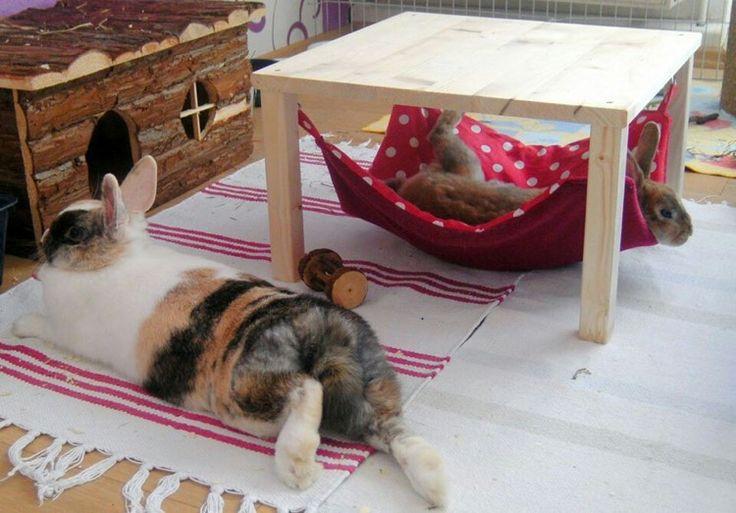 Kaninchengehege in der Wohnung: Hängematten sind sehr beliebt