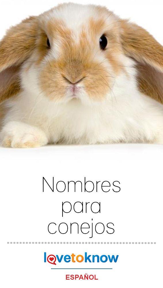 Nombres Para Conejos Con Imagenes Conejitos Como Mascotas