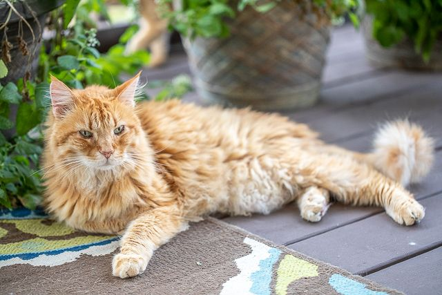 Meow Monday Plain Chicken Cat Fleas Cats Cats Outside