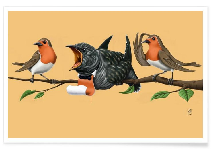 Cock Robin (colored) - Rob Snow   Creative - Premium Poster art   decor   wall art   inspiration   animal   home decor   ideas   gift
