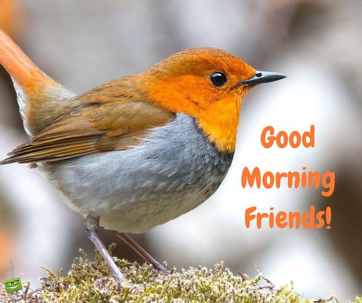 Good Morning, friends!