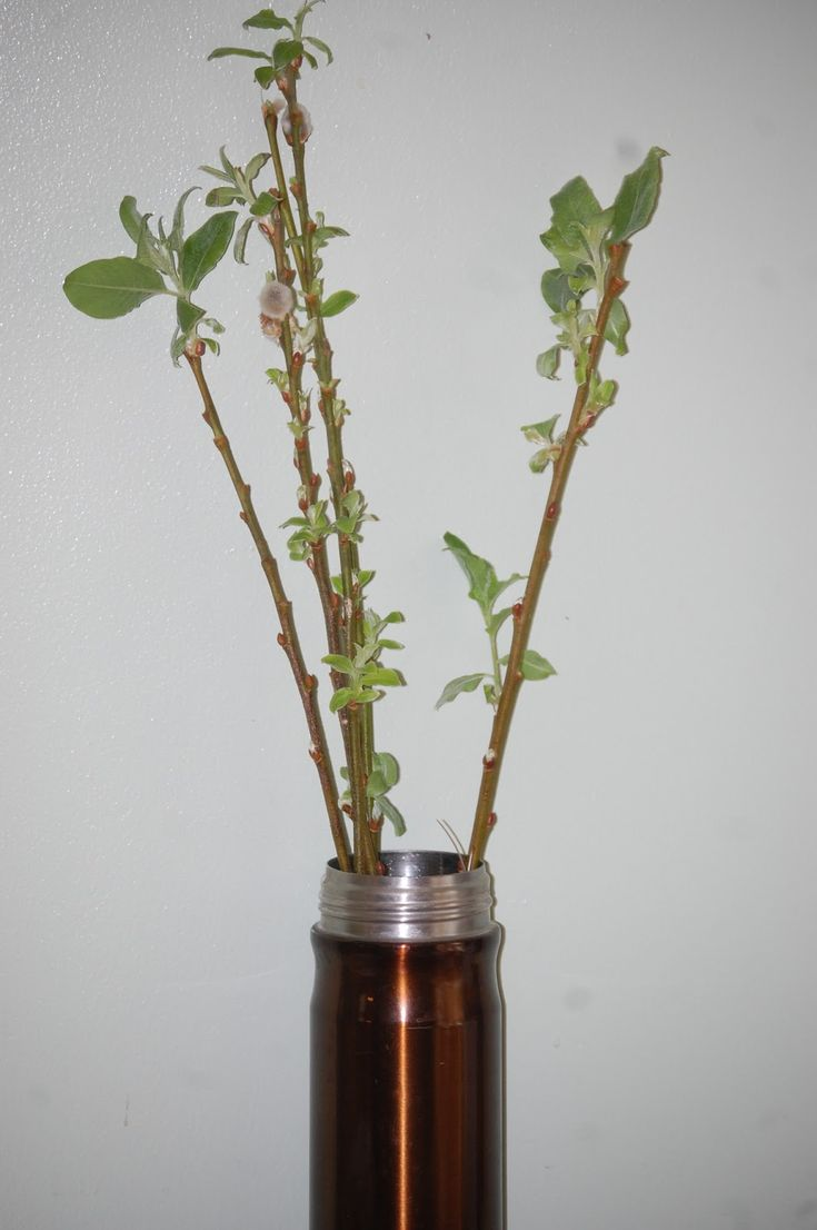 Pussy Willow Propagation 109