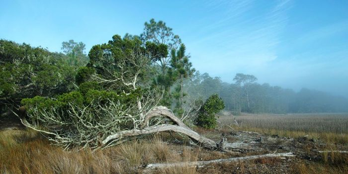 Petition Protect Cumberland Island  Take Action Michelle B