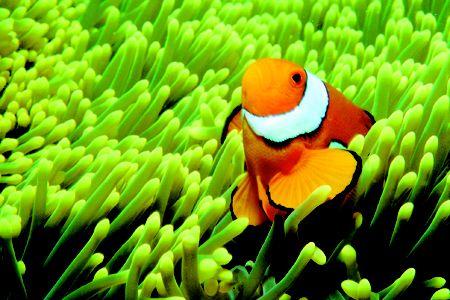 Top 10 scuba diving spots in Oz - TNT Magazine