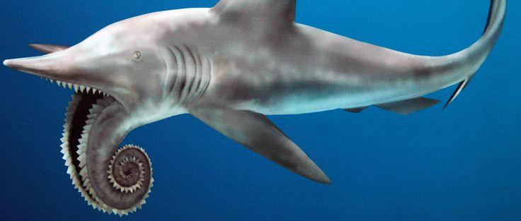 shark ancient Chubby
