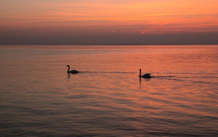Tramonto su bardolino.  #pictures #snapshot #art #beautiful #color #focus #capture #moment #bardolino #gardalake #bardolino #garda #lagodigarda #canon #canon70d #sigma #duck