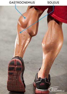 Bodybuilding.com - Raising Calves: Preston Noble's Training Plan For Freaky Lower Legs