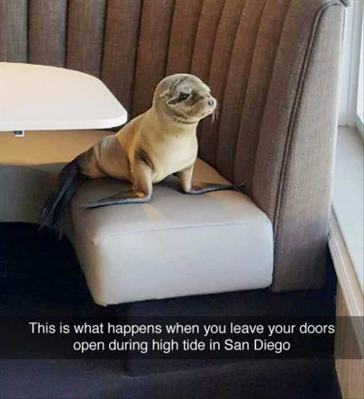 18 Funny Animal Pictures for Your Wednesday