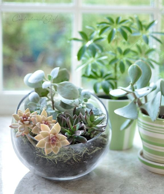 terrarium in slanted bubble bowl // Centsational Girl