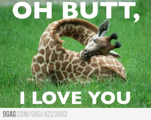 : Baby Giraffes, Butts, Giraffes Sleep, Baby Animal, Funny Stuff, Naps Time, Funny Animal, Sleep Giraffes, Sleep Baby
