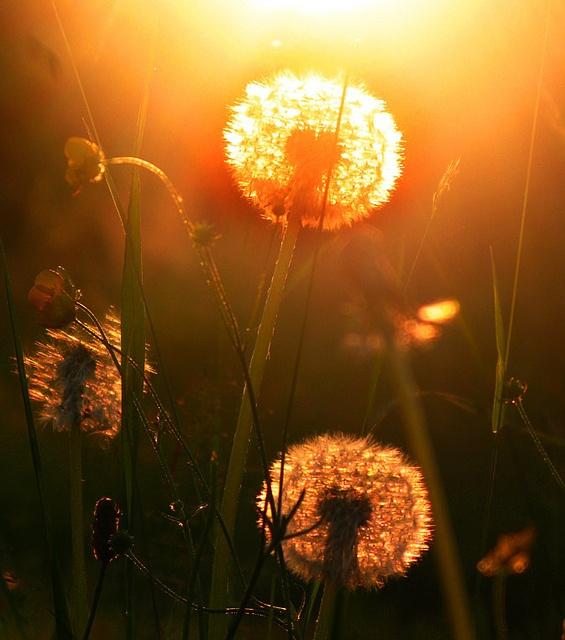 Make a wish...then blow....
