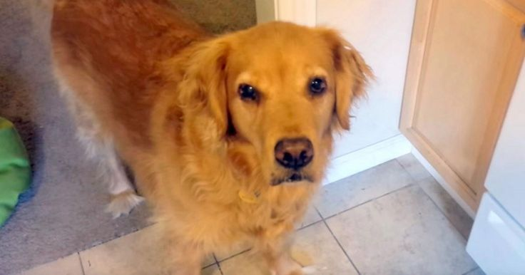Picky dog refuses to eat her food, but owner tricks her in hilarious fashion #Dogs