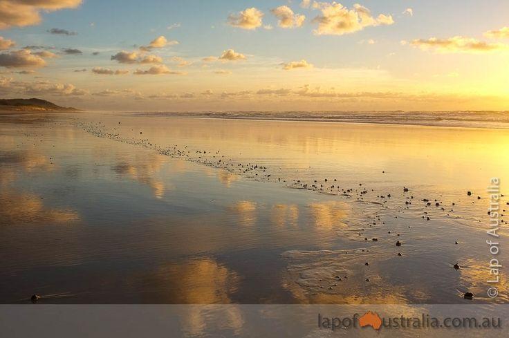 Summary: Fraser Island Part 1