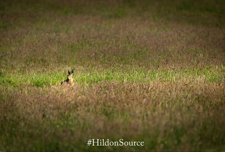 Get closer to nature with Hildon Natural Mineral Water #HildonSource