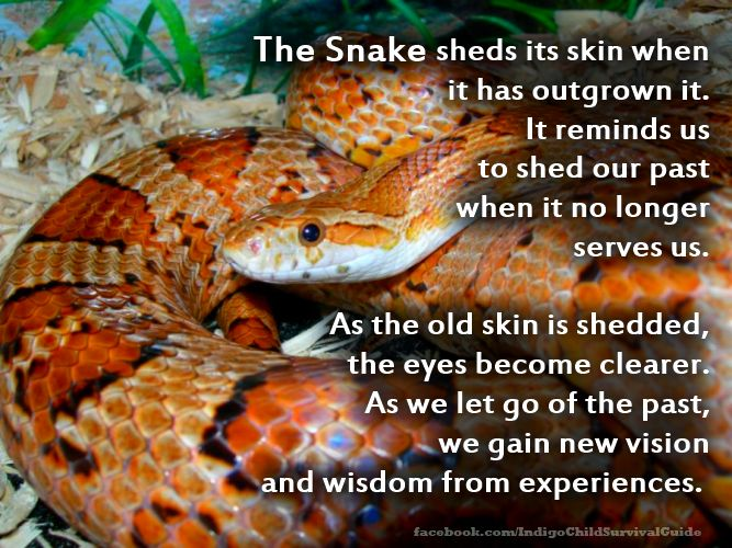 The snake represents death and rebirth. It symbolizes a transition; out with old…