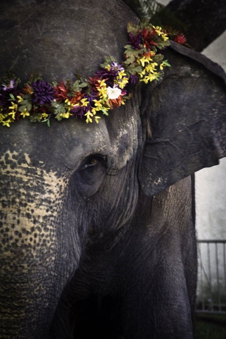 Elephant with flowers